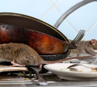 Keep Your Commercial Kitchen Clear of Pests