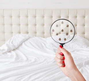 These Are the Signs You Have Bed Bugs in Your House