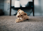 5 Signs You Need a Carpet Cleaning Service