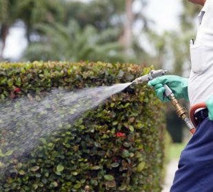 Top factors for finding the right exterminator in Boise